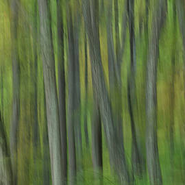 Dan Carmichael - Trees of the Forest Green - Blue Ridge Parkway