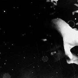 Jessica Shelton - Trepidation