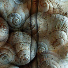 Florin Birjoveanu - Trimmed Snails