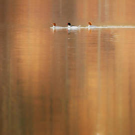 Trio Reflections Square by Bill Wakeley