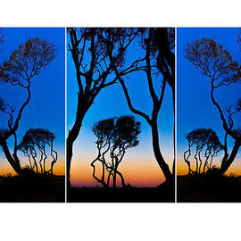 Triptych Trees Image Art by Jo Ann Tomaselli