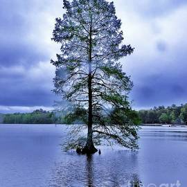 The Healing Tree - Trap Pond State Park Delaware by Kim Bemis