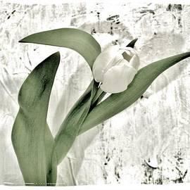 Marsha Heiken - Trophy Tulip