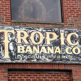 Debbie Nobile - Tropic Banana
