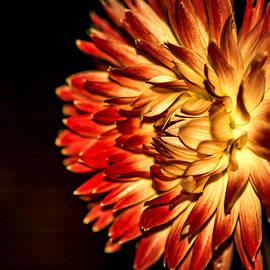 Jijo George - Tropical Flower 3