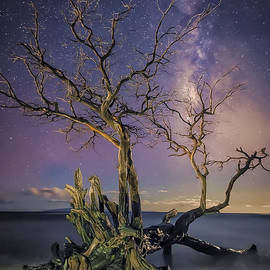Hawaii  Fine Art Photography - Tropical Nights