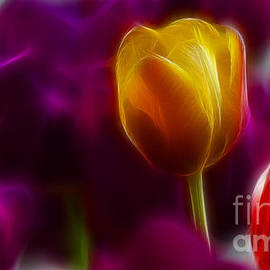 Tulip-6983 by Gary Gingrich Galleries
