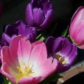 Tulip Bouquet # 1 by Marcus Dagan
