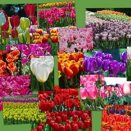 Allen Beatty - Tulip Collage