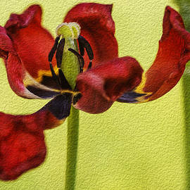 Vishwanath Bhat - Tulip Digital Painting