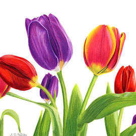 Sarah Batalka - Tulip Garden On White