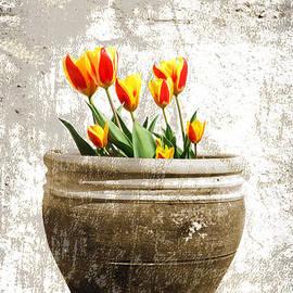 Mark Rogan - Tulipa
