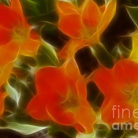 Gary Gingrich Galleries - Tulips-6582-Fractal