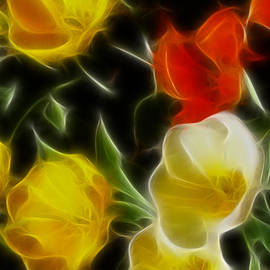Gary Gingrich Galleries - Tulips-6666-Fractal