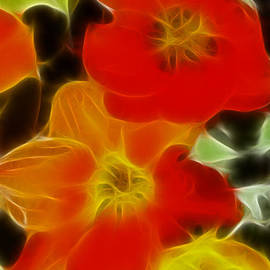 Gary Gingrich Galleries - Tulips-6681-Fractal