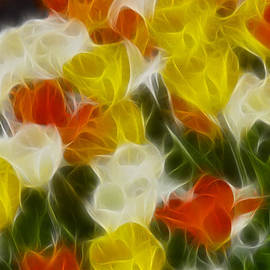 Gary Gingrich Galleries - Tulips-6802-Fractal