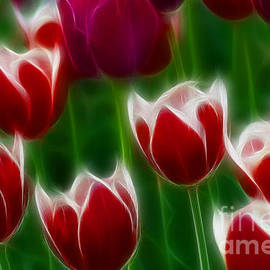 Gary Gingrich Galleries - Tulips-6823-Fractal