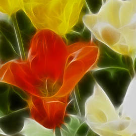 Gary Gingrich Galleries - Tulips-6881-Fractal