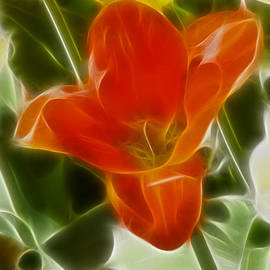 Gary Gingrich Galleries - Tulips-6888-Fractal