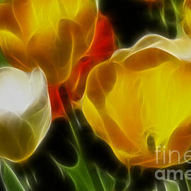 Gary Gingrich Galleries - Tulips-6911-Fractal