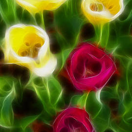 Gary Gingrich Galleries - Tulips-7075-Fractal