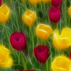 Gary Gingrich Galleries - Tulips-7087-Fractal