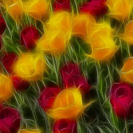 Gary Gingrich Galleries - Tulips-7108-Fractal