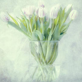 Tulips by Claudia Moeckel