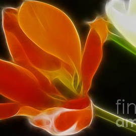 Gary Gingrich Galleries - Tulips-Fractal