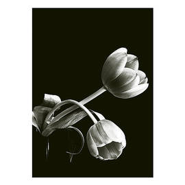 Don Saunderson - Tulips III