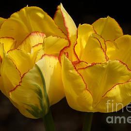 Inge Riis McDonald - Tulips