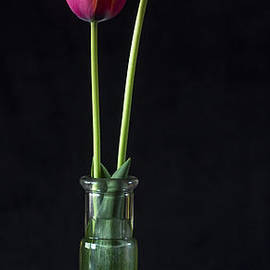 Tulips by Wayne Meyer