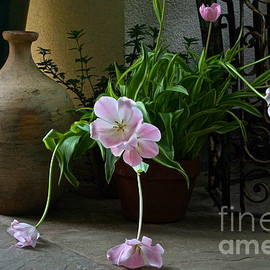Tulips With Earthenware Jar And Wrought Iron by Byron Varvarigos