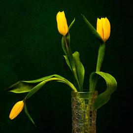 Alexander Senin - Tulips - Yellow on Green