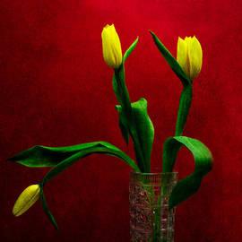 Alexander Senin - Tulips - Yellow on Red