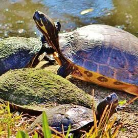 Cynthia Guinn - Turtle Family