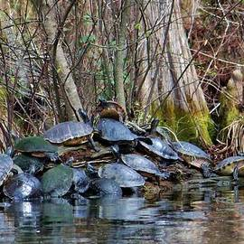 Cynthia Guinn - Turtle Landing