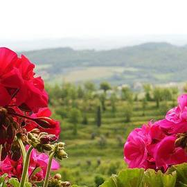 Marilyn Dunlap - Tuscan Hills and Flowers