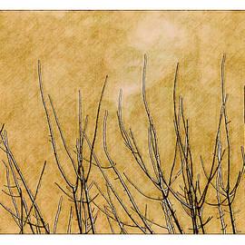 Gary D Baker - Twigs 1