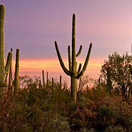 Sonoran Twilight  by Ed Riche
