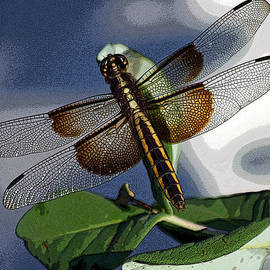 Twisted Dragonfly by Bob Hislop