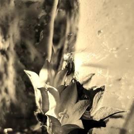 Sarah Pemberton - Twisted Reflections