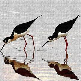 Tom Janca - Two Black Neck Stilts Eating