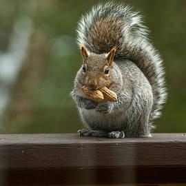 Two Peanut squirrel by Lyn Scott