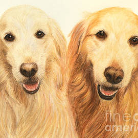 Kate Sumners - Two Retrievers Painted