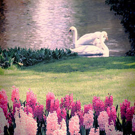 Jasna Buncic - Two Swans