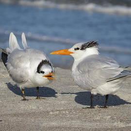 Ellen Meakin - Two Terns Talking