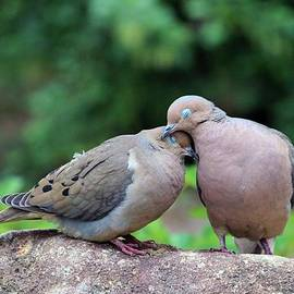 Two Turtle Doves by Cynthia Guinn