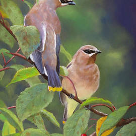 Marcus Moller - Two Waxwings One Berry
