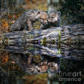 Les Palenik - Two wolf pups